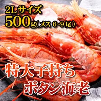 dポイントが貯まる・使える通販| 【500g(6-9尾)】特大子持ちボタン海老2Lサイズ メス 【dショッピング】 魚介類 その他 おすすめ価格