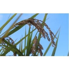 [0997]空海ゆかりの里 うまにのおいしいお米(白米)
