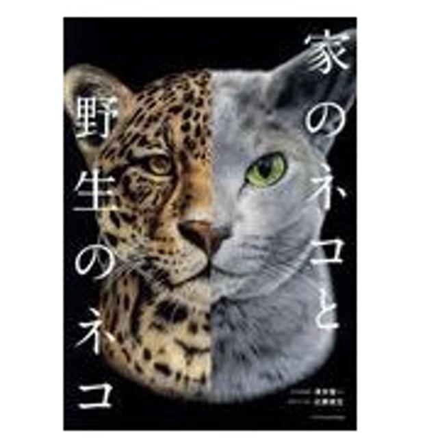 家のネコと野生のネコ/澤井聖一
