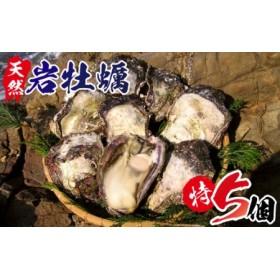 延岡産天然岩牡蠣(生食用)特サイズ5個(2019年4月から発送開始)