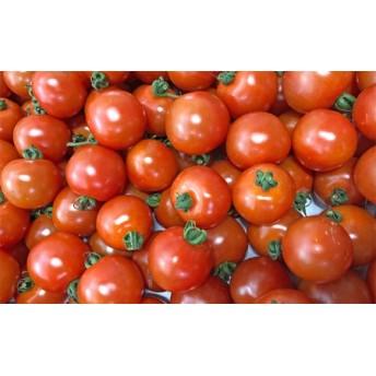 【2020年2月以降お届け】御殿場プチトマト あっこひめ 6パック