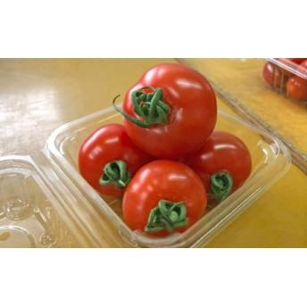 【2020年2月以降お届け】御殿場中玉トマト シンディスイート(約1.5kg)