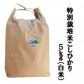MS-32 特別栽培米こしひかり5kg(白米)