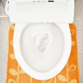 お掃除中にふんわり香る 水洗トイレの水ぎわ汚れ&パイプの汚れを退治する 非塩素トイレクリーナーの会 フェリシモ FELISSIMO【送料:450円+税】