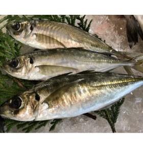 OM-22 獲れたて鮮魚 アジ約1kg(2~3匹)