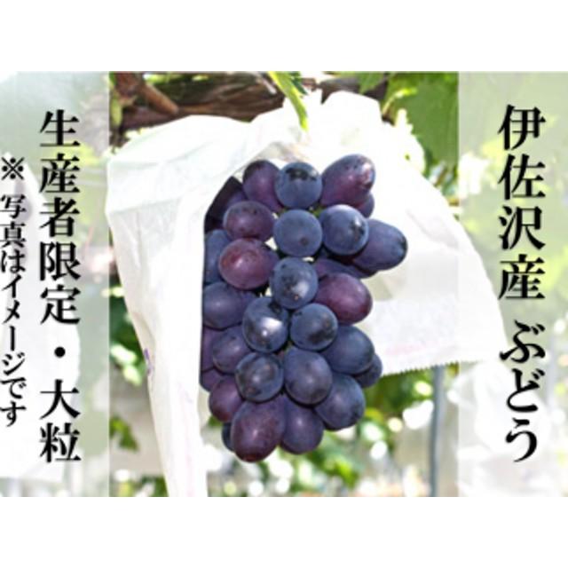 H013 伊佐沢産ぶどう(大粒種2~3種詰合せ)約3kg
