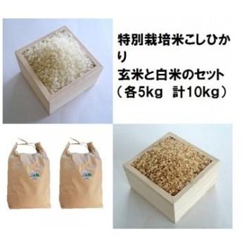 MS-37 特別栽培米こしひかり白米と玄米(各5kg)