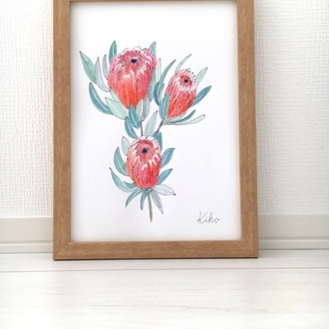 A4 ポスター原画 プロテアの花