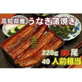 高知県産 うなぎ蒲焼き 220g 20尾セット Y-9