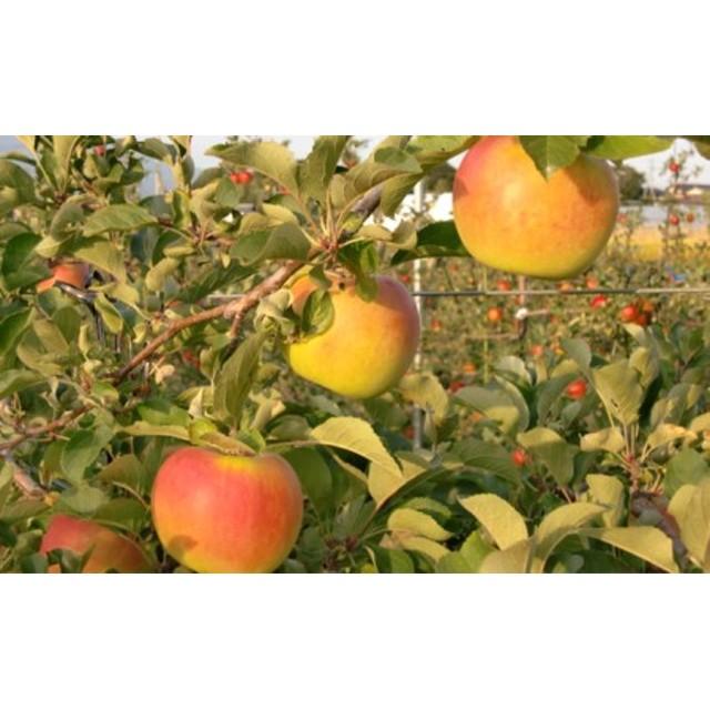 福井りんご園の名月 秀約5kg