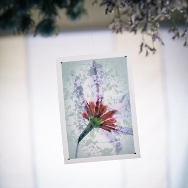【ART card】リューココリーネとクレマチス