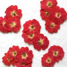 送料無料♪ お試し4枚・ミニ薔薇 押し花