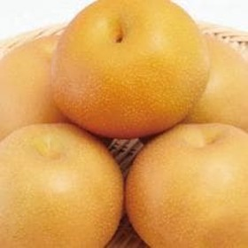 【数量限定】南信州発祥の甘~い梨『南水 5kg』
