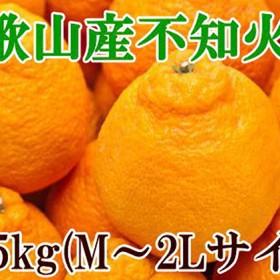 【春柑橘の代表格】和歌山の不知火(デコポン)約5kg(1箱)