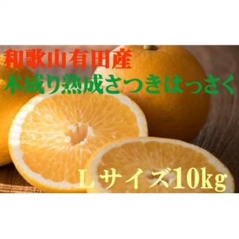 こだわりの和歌山有田産木成完熟八朔「さつき」赤秀品 10kg Lサイズ