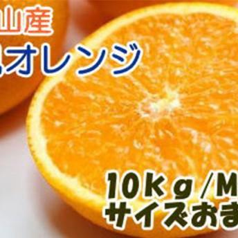 有田産清美オレンジ 10kg サイズおまかせ・秀品(1箱(M~3L))