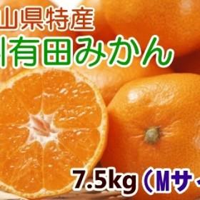 [厳選]紀州有田みかん 7.5kg(Mサイズ・赤秀)(Mサイズ・赤秀)