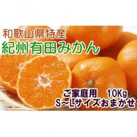 紀州有田みかん 10kg(S~L)サイズおまかせ ご家庭用