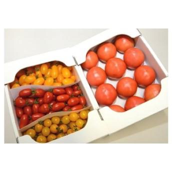 水耕栽培トマト詰め合わせ
