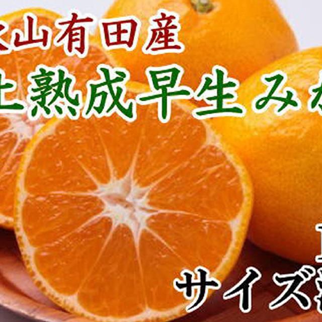 紀州有田産早生みかんの樹上熟成みかん 10kg(2S~2L)