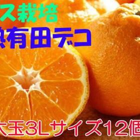 ハウス栽培大玉3L完熟有田デコ(不知火) 12個入り(12個入(3L))