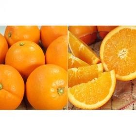 ネーブルオレンジ[約4.5kg]和歌山県産 春みかん