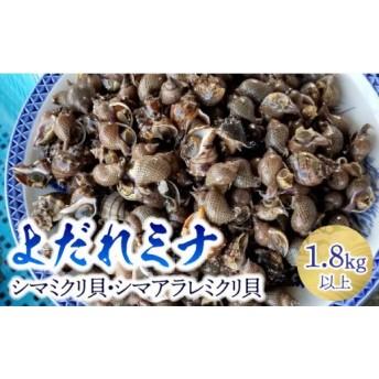 よだれミナ(シマミクリ貝・シマアラレミクリ貝)(セット)