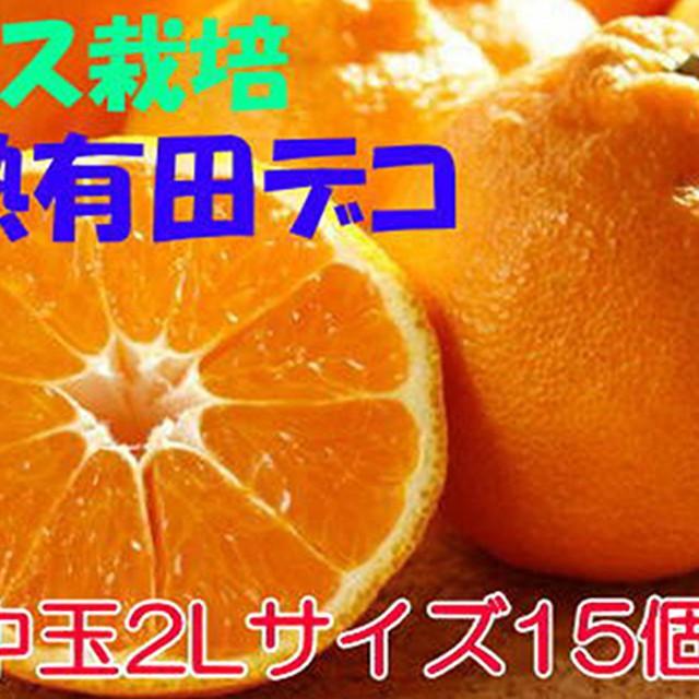 ハウス栽培中玉2L完熟有田デコ(不知火)15個入り(15個入(2L))