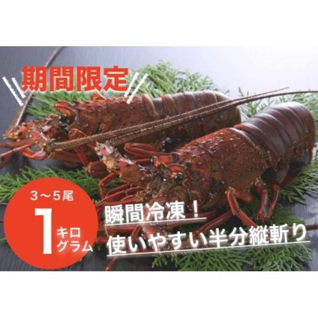 古澤水産 日南海岸伊勢海老 1㎏(3~5尾)9月11月限定