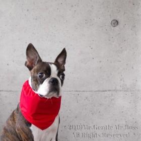 Red三角型クールスヌード《保冷剤入れるタイプ》犬服