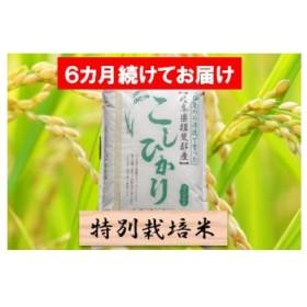 【6カ月定期便】特別栽培米 コシヒカリ 精米5kg×6回