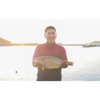 新鮮土佐魚の詰合せセットB