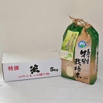 「令和元年産 新米」特別栽培米コシヒカリ5kg×1(無洗米)