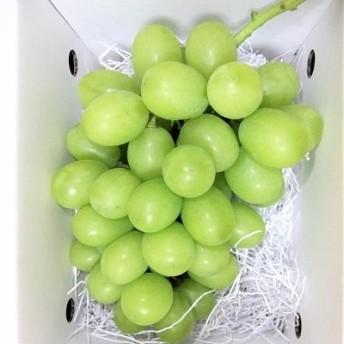 秋冬のフルーツセット【頒布会】 3000-206