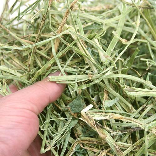 商品介紹 商品描述 ◆苜蓿草含有豐富的蛋白質和鈣,提供成長必需能量 適合6個月以下幼寵、懷孕、哺乳期和手術後之病寵 成分:苜蓿草,不含任何添加物 可幫助小動物研磨臼齒,滿足心理與生理的需求。 因數量有