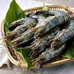 【大成海鮮】根島野生放養生態蝦(800g/40P)