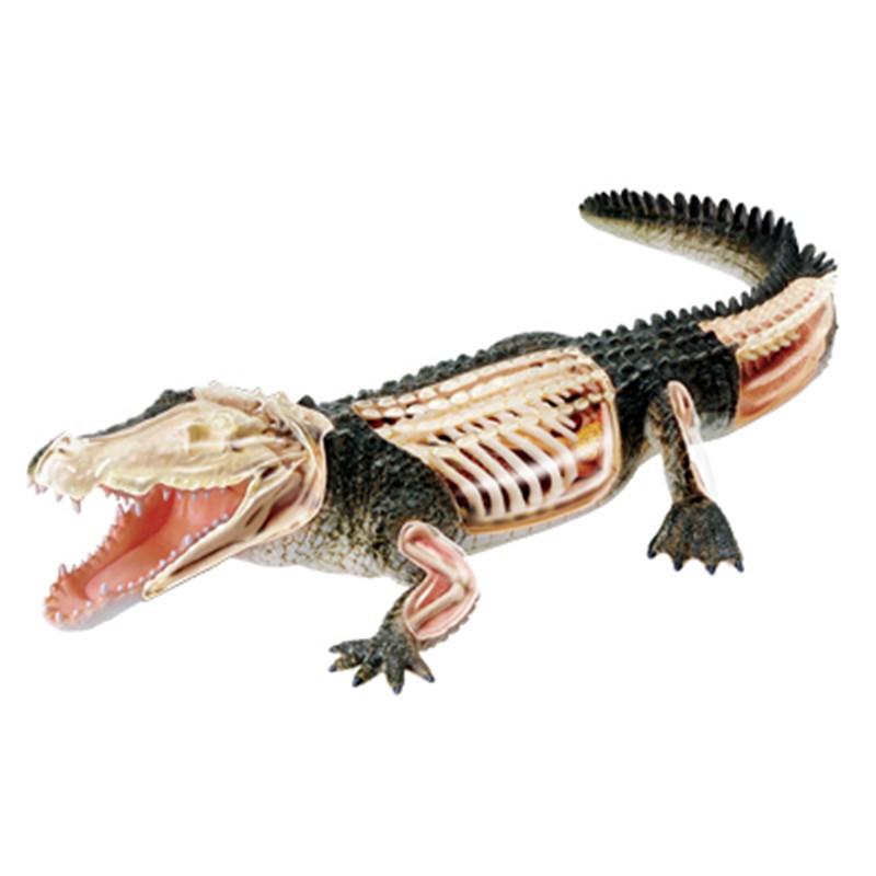 4D MASTER益智拼裝玩具模擬動物生物鱷魚器官解剖醫學用教學模型