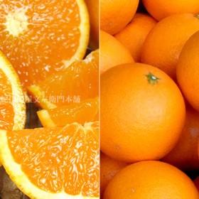 清見オレンジ[約8kg]和歌山県有田産 春みかん(セット)