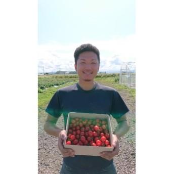 【畠山農園】高糖度フルーツミニトマト1.5kg