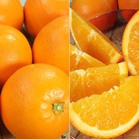 ネーブルオレンジ[約7kg]和歌山県有田産 春みかん(セット)