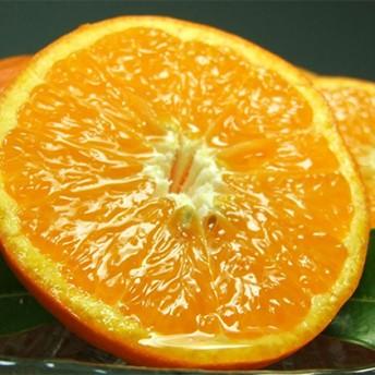 セミノールオレンジ約5kg 湯浅町田村産春みかん(サイズおまかせ)(セット)