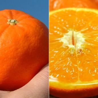 セミノールオレンジ[約6kg]和歌山県有田産 春みかん(セット)