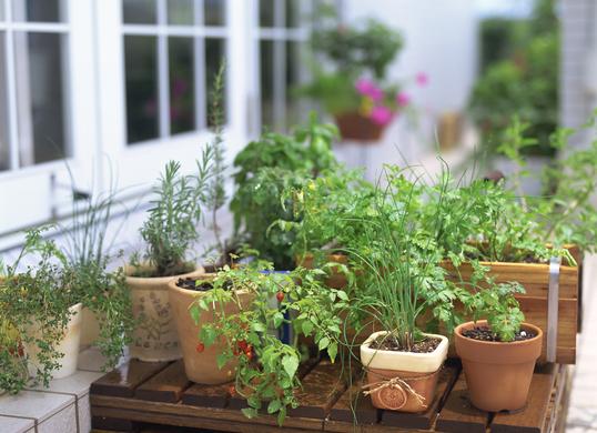 さまざまな鉢植えのハーブ