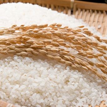 令和元年産甲良米「キヌヒカリ」(白米)15kg