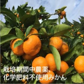 農薬・化学肥料不使用!【訳あり】早生みかん(計4.2kg)