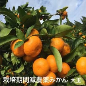 減農薬みかん 700g6パック(2L 大玉)