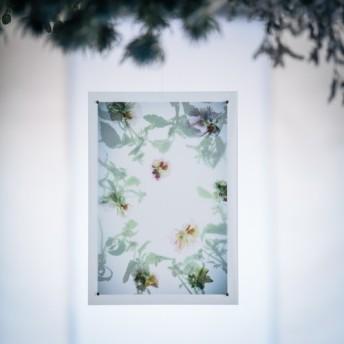 【ART card】パンジーの花と葉