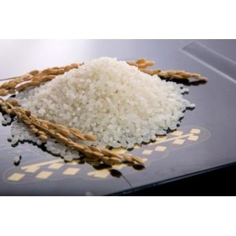 山口の美味しいお米定期便 5㎏×12回(白米)
