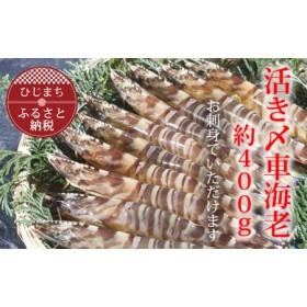 【お刺身用】大神の活き〆車海老(600g)