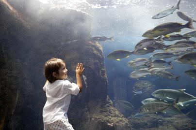 水族館で魚を見て楽しむ子ども